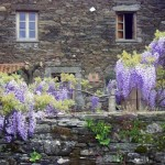 turismo-rural-pousadoira-galicia-casa-diante-flores_0